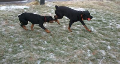 bella on left & ranger