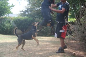 He loves jumping!
