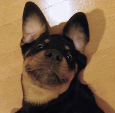 Cute Pup Pose
