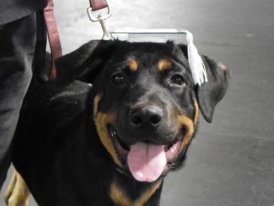 Jax's Puppy Graduation  10-10