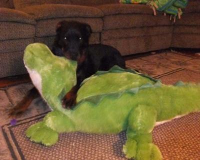 Gemini & her gator