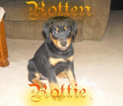 Rotten Rottie