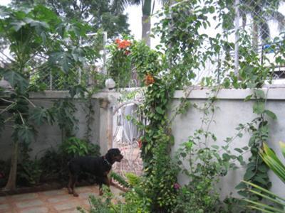 Lex guarding the front gate