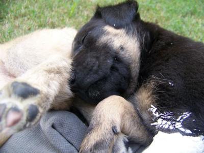 Mishka resting
