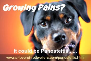 About Panosteitis, aka 'Pano'