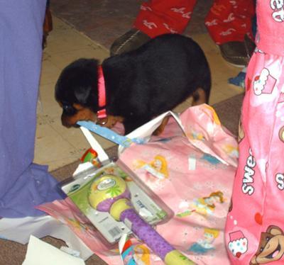 Angelika helping with Christmas