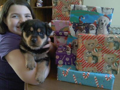 Sasha, 5 wks old, Merry Christmas!