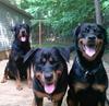 Zaro, Leanae, Zendaya